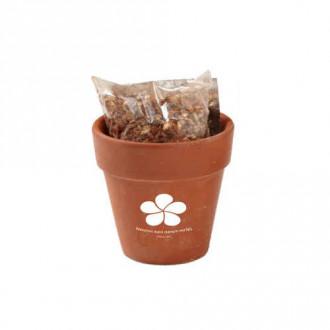 Seed Sensations Terracotta Pot